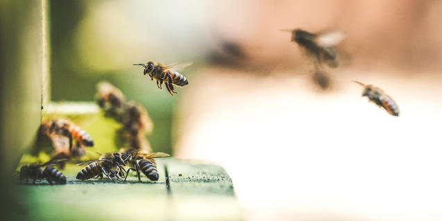 Imagen de abejas aterrizando