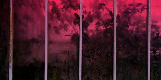 Una de las imágenes que podemos ver en la exposición muestra unas plantas en el interior de un invernadero