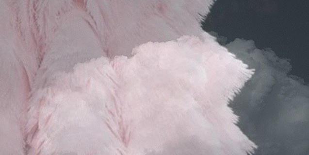 Una de las imágenes de la exposición de Ania Nowak