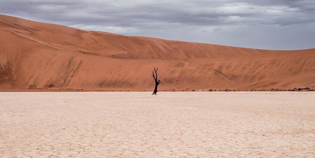 Imatge d'un arbre que no s'ha pogut adaptar a l'entorn àrid