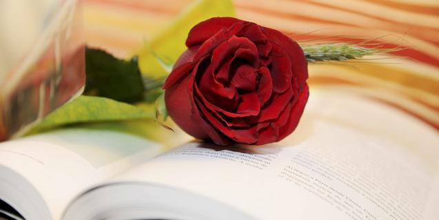 una rosa sobre un libro abierto