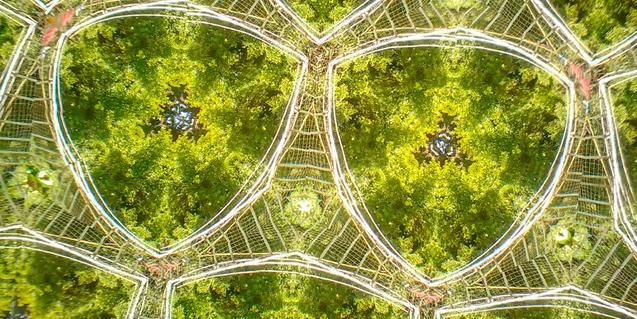 Árboles vistos a través de un caleidoscopio