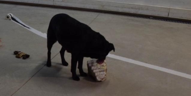 Una imatge d'un gos negre serveix per promocionar l'exposició