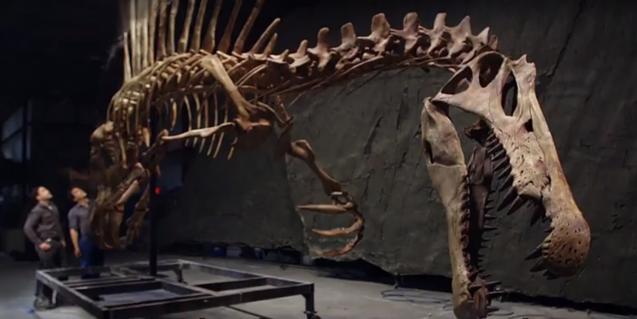 Spinosaurus,el dinosaure que nedava