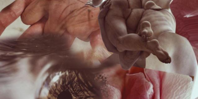Un collage amb imatges d'òrgans i parts del cos humà il·lustra l'activitat