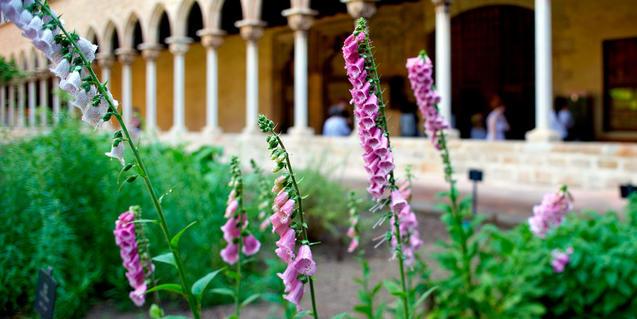 Imagen de flores de digital en el monasterio
