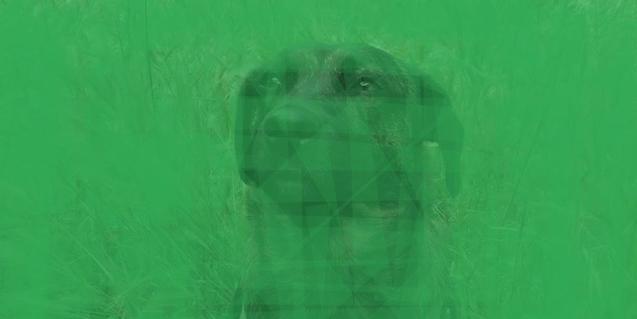 Una Imagen fotográfica de un perro vista a través de un filtro de color verde