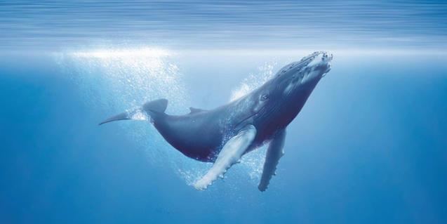 Imatge d'una balena