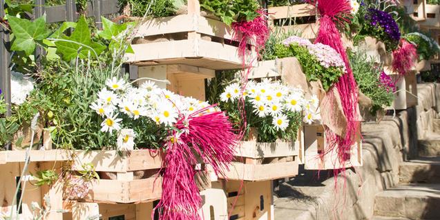 Fotografía de cajas de fruta de madera llenas de flores y plantas
