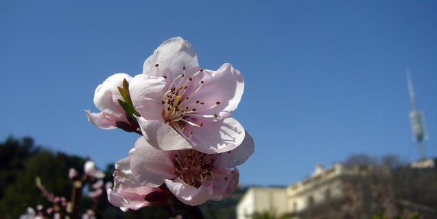 Flores en la finca Pedro y Pons