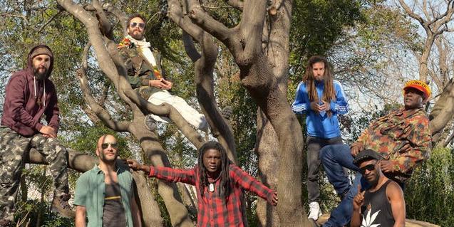 Els integrants d'aquesta formació d'afro reggae retratats pujats a les branques d'un arbre