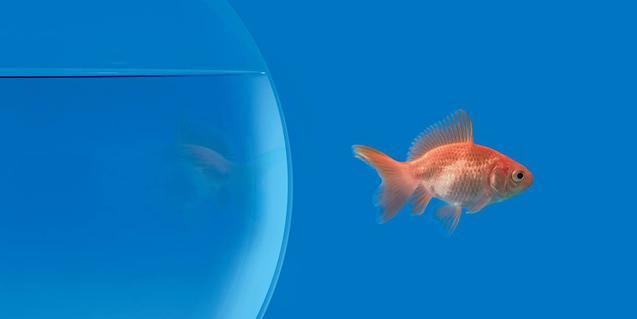 Il·lustració que mostra un peix nedant fora de la seva peixera