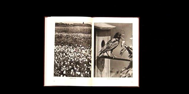 Imágenes de flores y de pájaros en un libro hecho combinando libros diversos