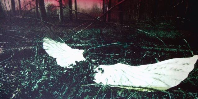 Fotografía de un bosque con unas alas blancas pintadas en el centro