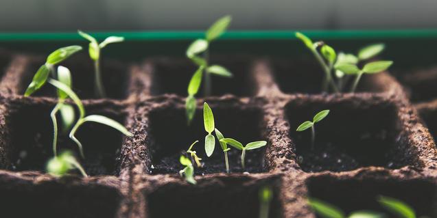 Imagen de plantas germinadas