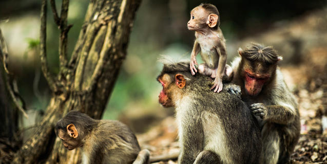Bebès animals