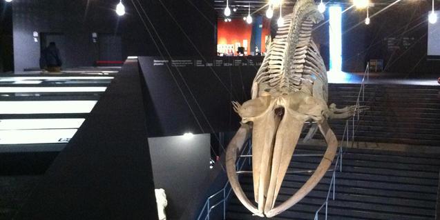 Imatge de l'esquelet de balena del Museu de Ciències Naturals