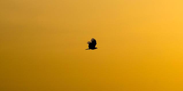 Foto de un pájaro