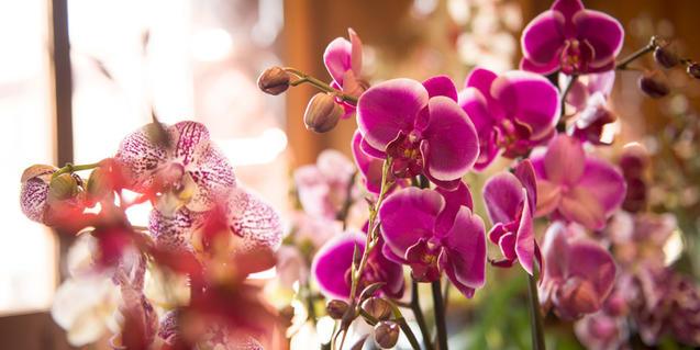 Imagen de unas orquídeas