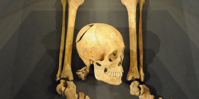 Crani i ossos d'extremitats que s'exposen a la mostra