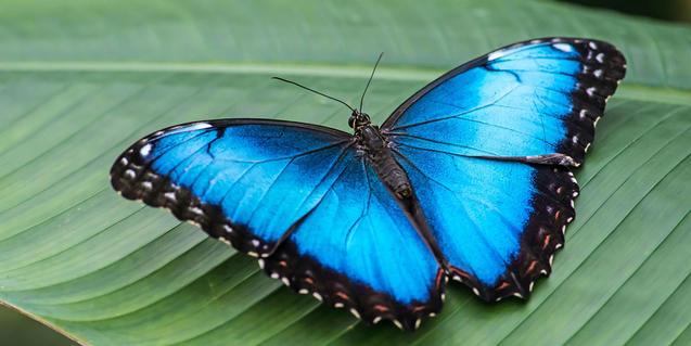 Imagen de una mariposa