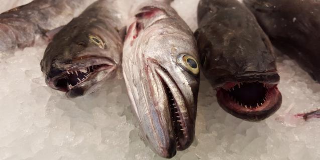 peixos sobre gel