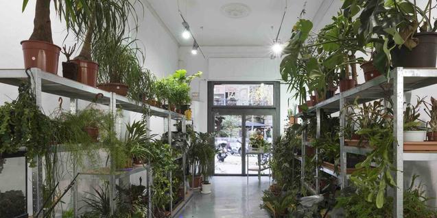 La galería ADN llena de plantas durante la exposición de Pep Vidal