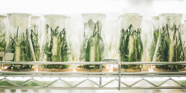Imagen de plantas de laboratorio