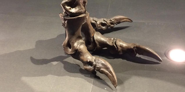 Imagen de la pata de un T. rex