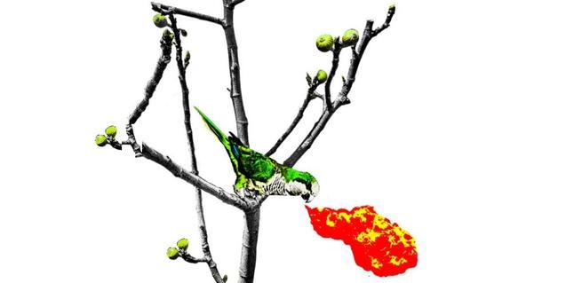 El dibujo de un pájaro en una rama en el cartel que anuncia la fiesta