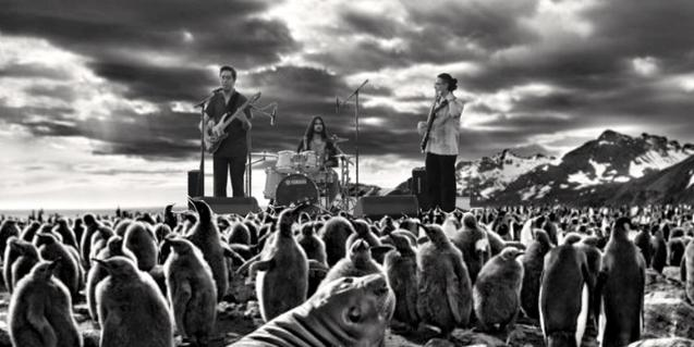 Fotomontaje que muestra a los miembros de la banda en un paisaje ártico tocando para un público de pingüinos y focas