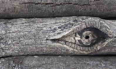 Una de las obras de este fotógrafo que pueden verse en la exposición y que muestra un tronco de árbol con un nudo que parece un ojo