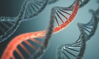 Imatge d'una simulació de molècules d'ADN