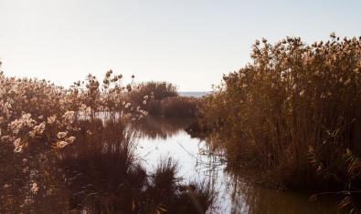 Un paisatge natural dels afores de Barcelona amb un curs d'aigua i vegetació abundant