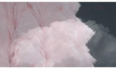 Una de les imatges de l'exposició d'Ania Nowak