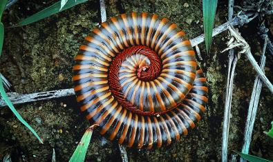 Espirals a la natura