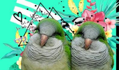 Imatge del cartell de 'Calladitas estáis más guapas. Fest'
