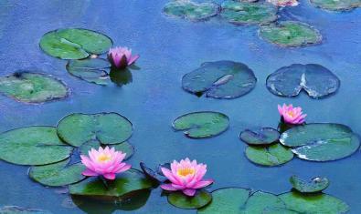 Cartel de 'Los nenúfares de Monet', documental que inaugura la nueva temporada del ciclo