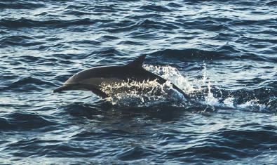 Imagen de un delfín