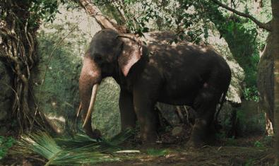 Un elefant s'endinsa en la selva en un fotograma del film