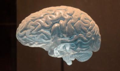 Imatge d'una figura d'un cervell
