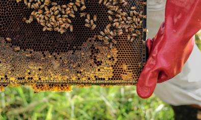 Imagen de un rusco de abejas