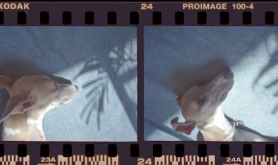 El cap d'un gos que dorm en dos imatges de negatiu positivades que es poden veure a l'exposició