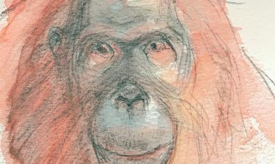 Un dels dibuixos de Sabater Pi presents a la mostra