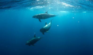 Imagen de delfines en el agua