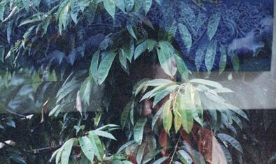Una de les imatges de l'artista amb doble exposició mostra el rostre d'una dona emergint d'un mur vegetal