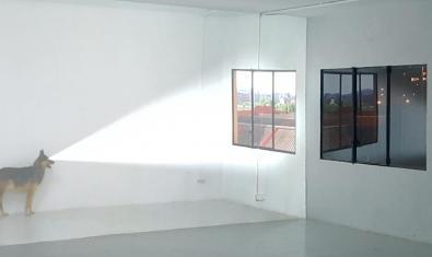 Una imagen de la instalación en la cual la imagen proyectada de un perro proyecta a su vez una segunda imagen