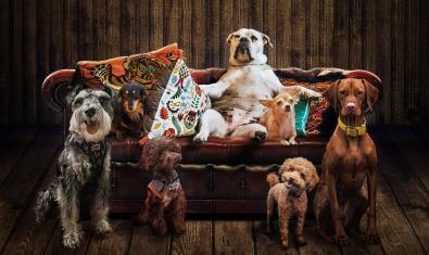 Set gossos còmodament instal·lats en un sofà en la imatge que serveix per publicitar l'espectacle