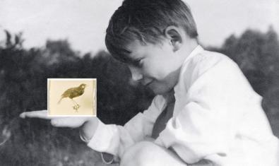 'Pájaro disecado', de la sèrie 'Estratos', una de les obres exposades de Concha Martínez Barreto