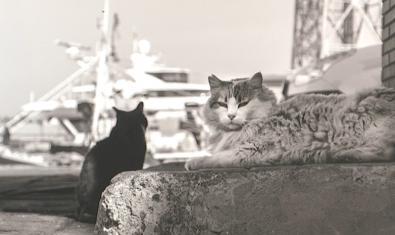 Una de les fotografies de l'exposició en blanc i negre